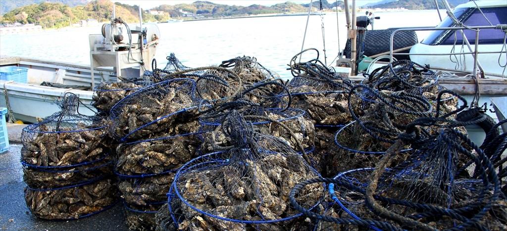 水揚げされた大量の牡蠣